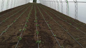 Обработка на ниви и градини. Агро услуги.