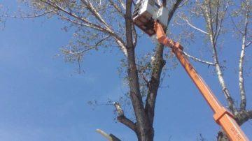 Премахване на опасни дървета и клони, оформяне и кастрене на дървета